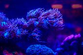 Underwater Life Of The Sea In The Aquarium. Corals Are Sea. Living Creatures Of The Sea. Zoo poster