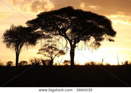 Sunset In Tarangire