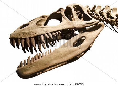 Dinosaur Skeleton Over White Isolated Background