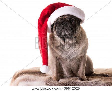 New Year Pug