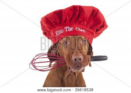 Dog Christmas Chef