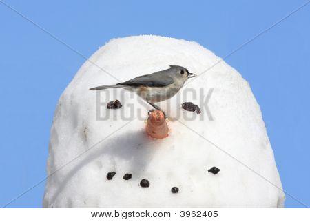 Aves en un muñeco de nieve