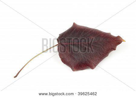 A Red Leaf Tree