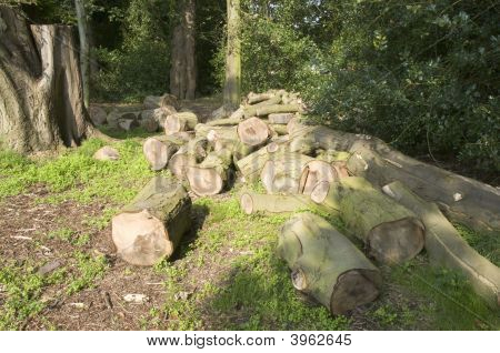 Cut Logs In Forest