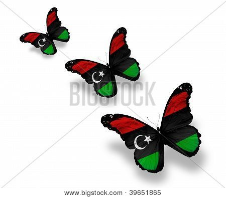Three Libyan Flag Butterflies, Isolated On White
