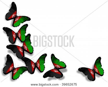 Afghani Flag Butterflies, Isolated On White Background