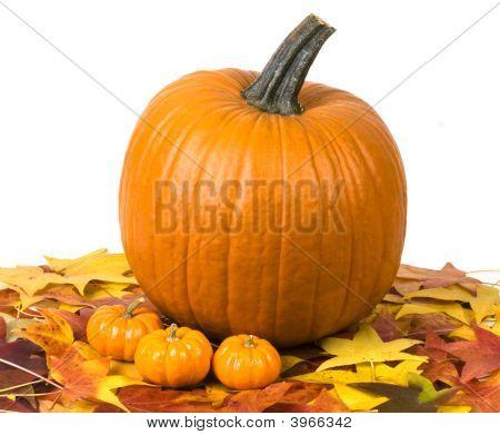 Pumpkin Still Life 5