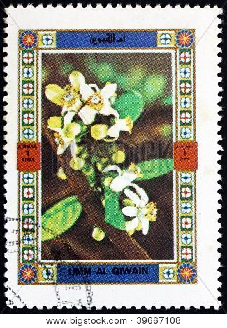 Postage stamp Umm al-Quwain 1972 Flower, Nature