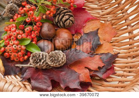 Autumn collection, leaves, conkers, pinecones, berries, basket