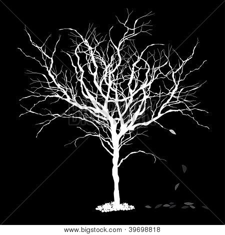 Tree silhouettewith fallen leaves. Raster version, vector file available in portfolio.