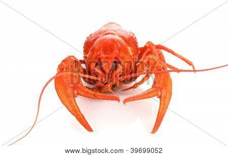 Tasty boiled crayfish isolated on white