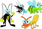 insect pests in home