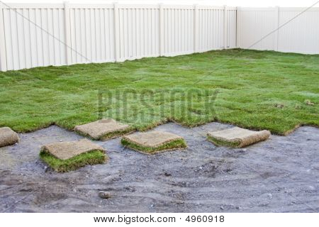 New Sod Grass