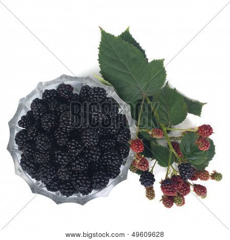 Ripe dewberry in a bowl and a branch with berries