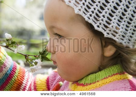 Child Sniffs Flowering Tree