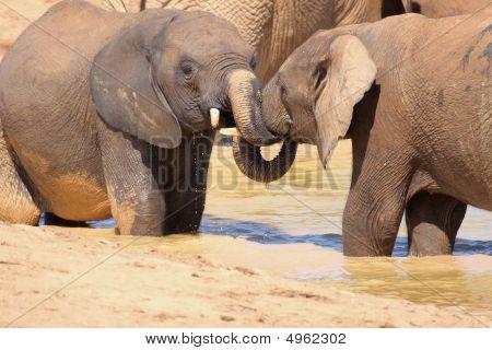 Elefantes de luta