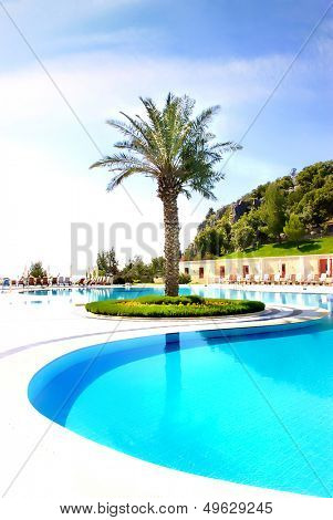swimpool and palm tree on resort territory