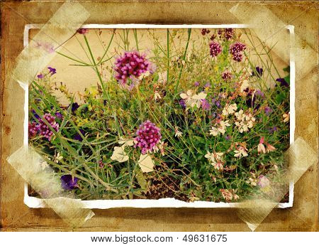 old photoalbum with wild flowers card