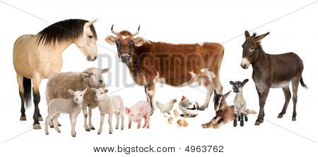 Group Of Farm Animals : Cow, Sheep, Horse, Donkey, Chicken, Lamb, Ewe,goat, Pig