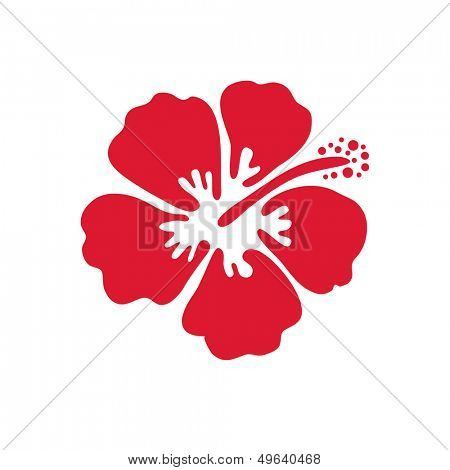 Hibiscus flower. Vector illustration.