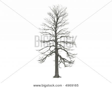 Leafless Winter Tree