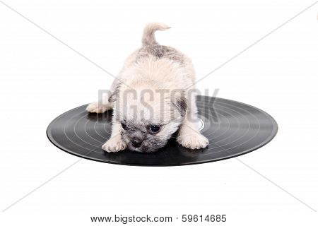 Music Record Puppy