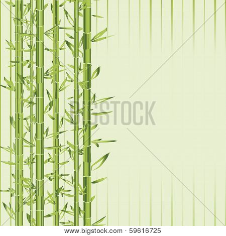 Green Bamboo With Stripe