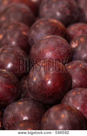 Sunripe Plums