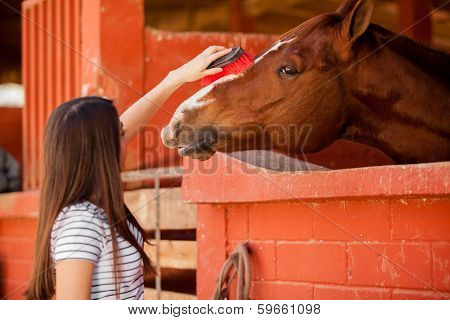 Taking care of my horse