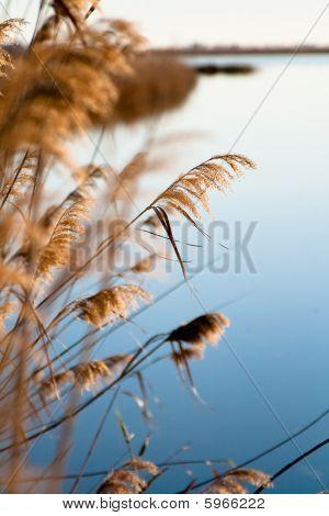 Plants On The Marsh Shore
