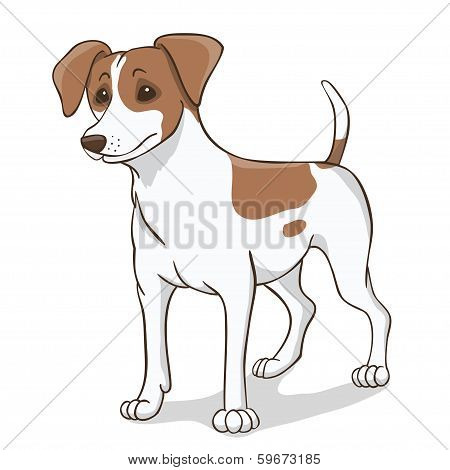 Jack Russell  Brown