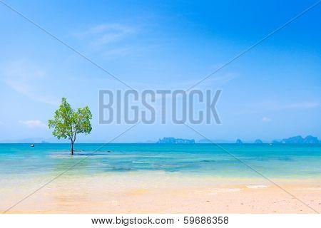 Lonely Mangrove tree in Krabi Thailand
