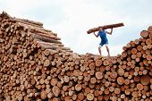 stock photo of encounter  - man on top of large pile of logs - JPG