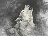 picture of white wolf  - Wolf - JPG