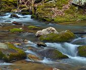 stock photo of brook trout  - A mountain trout stream in Southwestern Virginia - JPG