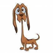 image of bloodhound  - Little cute brown puppy of bloodhound - JPG