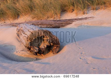 Driftwood in Sand