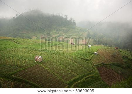 Indonesia, rice terraces, on high mountain