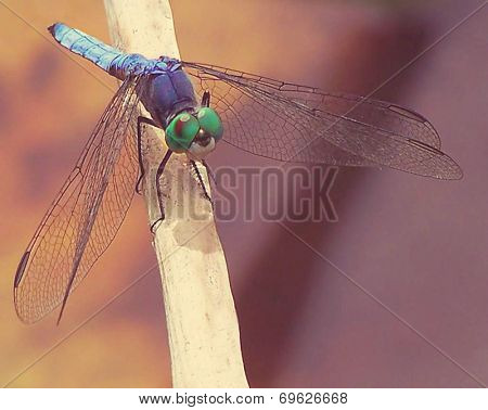 a dragonfly isolated on a soft background toned with a retro vintage instagram filter