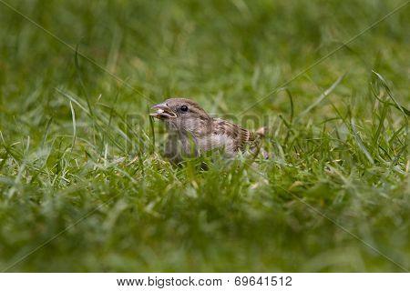 Sparrow feeding.