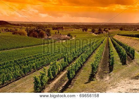 Vineyard Sunrise-vineyards Of Saint Emilion, Bordeaux Vineyards