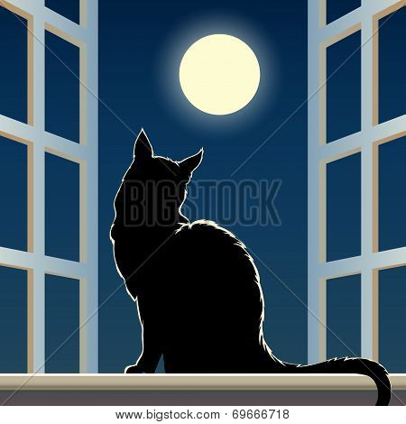 cat on a window sill
