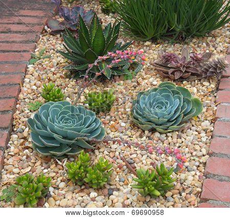 Succulent Plants Garden
