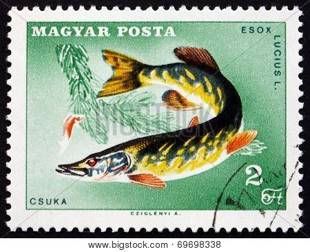Postage Stamp Hungary 1967 Northern Pike, Fish