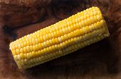 foto of zea  - Fresh corn on the cob or maize with succulent yellow kernels peeled and cleaned for cooking on a dark shadowed background - JPG