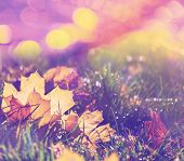stock photo of flood-lights  - autumn leaves - JPG