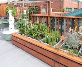 picture of photosynthesis  - Rooftop garden in urban setting with planters - JPG