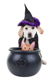 foto of sorcerer  - Funny Halloween witch pets dog and cat - JPG