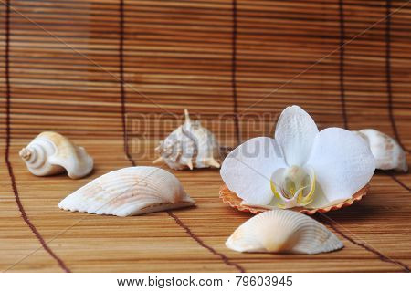 Orchid On  Straw Napkin