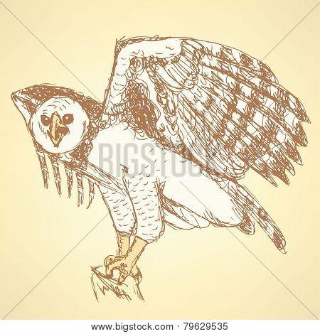 Sketch Harpia Bird Head In Vintage Style